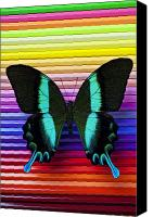 Insects Canvas Prints - Butterfly on colored pencils Canvas Print by Garry Gay