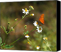 Florida State Canvas Prints - Butterfly on Widflower Canvas Print by Sandy Keeton
