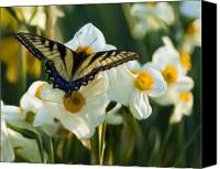 Daffodil Flowers Digital Art Canvas Prints - Butterfly Canvas Print by Samuel Bondurant