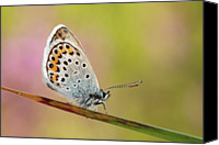 Natural Pattern Photo Canvas Prints - Butterfly Canvas Print by Stefady