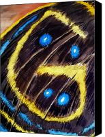Insects Painting Canvas Prints - Butterfly Wing Canvas Print by Irina Sztukowski