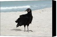 Buffet Canvas Prints - Buzzard Beach Canvas Print by Jack Norton