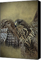 Eagle Watching Canvas Prints - Buzzard Preparing To Fly Canvas Print by Ethiriel  Photography