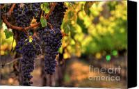 Blue Grapes Canvas Prints - Cabernet Afternoon Canvas Print by Mars Lasar