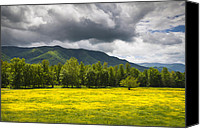 Gatlinburg Canvas Prints - Cades Cove Great Smoky Mountains National Park TN - Fields of Gold Canvas Print by Dave Allen