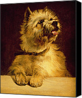 Dogs Canvas Prints - Cairn Terrier   Canvas Print by George Earl