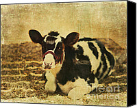 Calf Canvas Prints - Calf Poser Canvas Print by Carolyn Rauh
