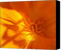Orange Flower Photo Canvas Prints - California Poppy Canvas Print by Liz Vernand