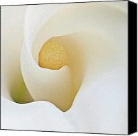 Tropical Plants Canvas Prints - Calla Details 3 Canvas Print by Heiko Koehrer-Wagner