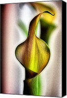Calla Lily Mixed Media Canvas Prints - Calla Canvas Print by Jennifer Woodworth