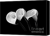 Calla Lily Canvas Prints - Calla Lilies - Black and White Canvas Print by Larry Carr