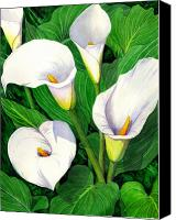 Floral Canvas Prints - Calla Lilies Canvas Print by Catherine G McElroy