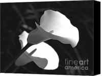 Calla Lily Canvas Prints - Calla Lilies in Black and White Canvas Print by Jennie Marie Schell