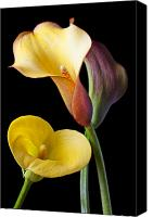 Decorate Canvas Prints - Calla lilies still life Canvas Print by Garry Gay