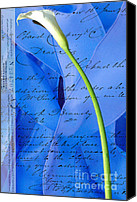 Calla Lily Mixed Media Canvas Prints - Calla Lilly on Blue Ribbon Love Letter Canvas Print by Anahi DeCanio