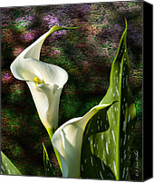 Walker Digital Art Canvas Prints - Calla Lily - P. Bright Canvas Print by J Larry Walker