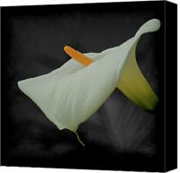 Calla Lily Canvas Prints - Calla Lily 2 Canvas Print by Ernie Echols