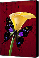 Callas Canvas Prints - Calla lily and purple black butterfly Canvas Print by Garry Gay
