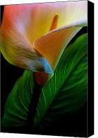 Calla Lily Canvas Prints - Calla Lily Canvas Print by Dung Ma