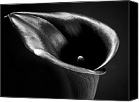 Flower Images Canvas Prints - Calla Lily Flower Black and White Photograph Canvas Print by Artecco Fine Art Photography - Photograph by Nadja Drieling