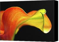 Calla Lily Canvas Prints - Calla Lily Canvas Print by Juergen Roth