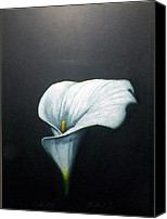 Calla Lily Drawings Canvas Prints - Calla Lily Canvas Print by Mickael Bruce
