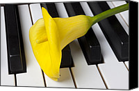 Lilies Canvas Prints - Calla lily on keyboard Canvas Print by Garry Gay