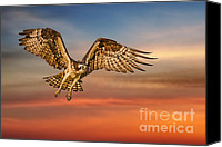 Osprey Canvas Prints - Calling it a Day Canvas Print by Susan Candelario