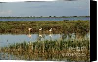 Aves Canvas Prints - Camargue.Etang of Vacarres Canvas Print by Bernard Jaubert