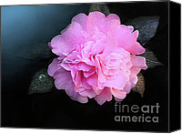 Camelia Canvas Prints - Camelia Canvas Print by Robert Foster