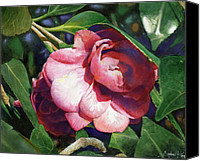 Botanicals Canvas Prints - Camellianne Canvas Print by Andrew King