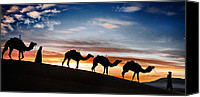 Caravan Canvas Prints - Camels - 2 Canvas Print by Okan YILMAZ
