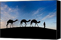 Caravan Canvas Prints - Camels - 3 Canvas Print by Okan YILMAZ