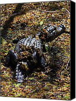 Gator Canvas Prints - Camouflage Canvas Print by Carol Groenen