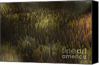 Lush Canvas Prints - Canadian Forest - The woods are lovely dark and deep Canvas Print by Christine Till