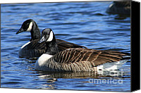 Wildlife Canvas Prints - Canadian Geese Canvas Print by Neal  Eslinger