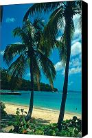 Beach Photos Canvas Prints - Caneel Bay Palms Canvas Print by Kathy Yates