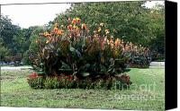 Canna Canvas Prints - Canna 11 Canvas Print by Padamvir Singh