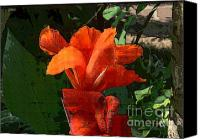 Canna Canvas Prints - Canna 14 Canvas Print by Padamvir Singh
