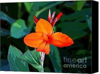 Canna Canvas Prints - Canna 6 Canvas Print by Padamvir Singh