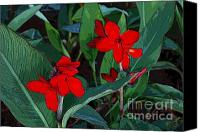 Canna Canvas Prints - Canna 7 Canvas Print by Padamvir Singh