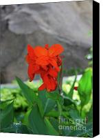 Canna Canvas Prints - Canna 8 Canvas Print by Padamvir Singh