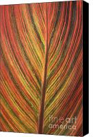 Canna Canvas Prints - Canna Leaf Canvas Print by Patrick  Short