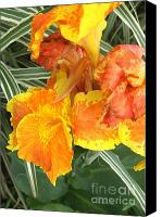 Canna Canvas Prints - Canna Lilies Canvas Print by David Bearden