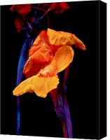 Canna Canvas Prints - Canna Lilies on Black With Blue Canvas Print by Carol Senske