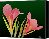 Canna Canvas Prints - Canna Lilly Whimsy Canvas Print by Rand Herron