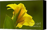 Canna Canvas Prints - Canna Lily Canvas Print by Heiko Koehrer-Wagner