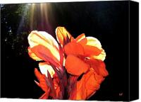 Canna Canvas Prints - Canna Lily Canvas Print by Will Borden