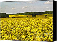 Rural Scenes Photo Canvas Prints - Canola Field Canvas Print by Heiko Koehrer-Wagner