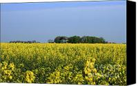 Sky Pyrography Canvas Prints - Canola Field Canvas Print by Stefan Kuhn